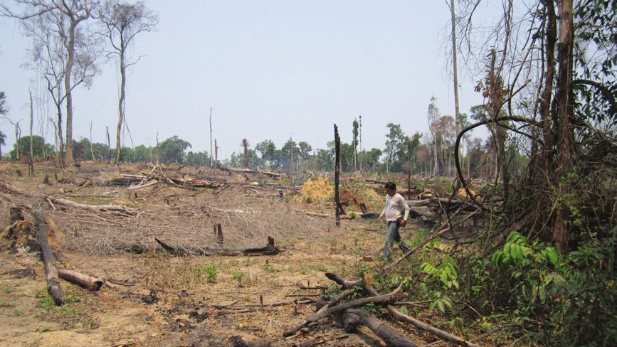 Prey Lang, primary forest in central Cambodia, 2013 © ADHOC